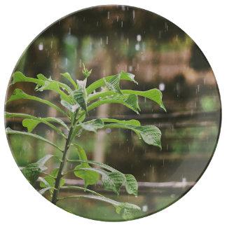 Lluvia que vierte sobre las plantas plato de cerámica