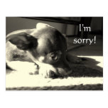 ¡Lo siento! Tarjetas Postales
