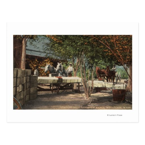 Loading Fruit at Longview Ranch Post Cards