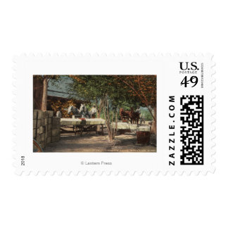 Loading Fruit at Longview Ranch Postage