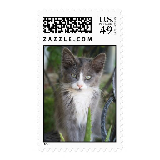 Loakey el gato sello