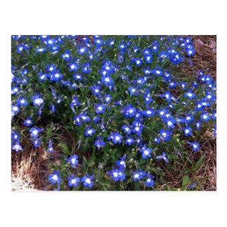 Lobelia observado azul del palacio postal