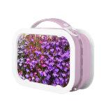Lobelia violeta, caja del almuerzo
