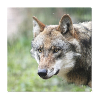 Lobo 001