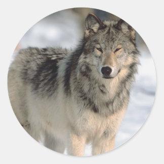Lobo alerta etiquetas