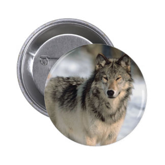 Lobo alerta pins