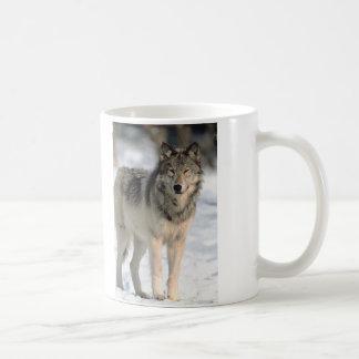 Lobo alerta taza de café