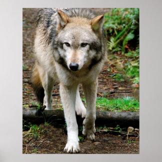 Lobo alfa póster