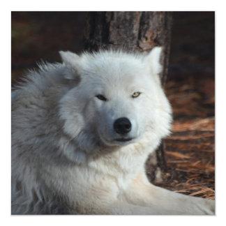 Lobo ártico adorable invitación 13,3 cm x 13,3cm