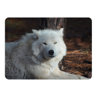 Lobo ártico adorable invitación 12,7 x 17,8 cm