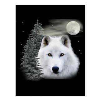 lobo ártico de la nieve postales