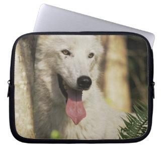 Lobo ártico en bosque mangas portátiles
