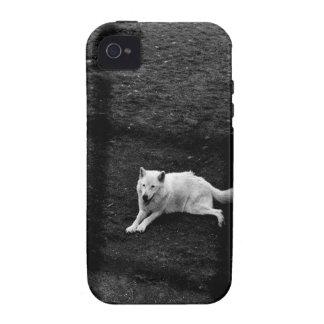 Lobo ártico iPhone 4 funda