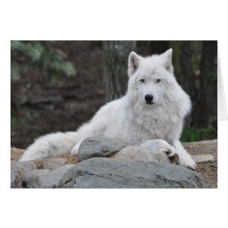 Lobo ártico tarjeta de felicitación