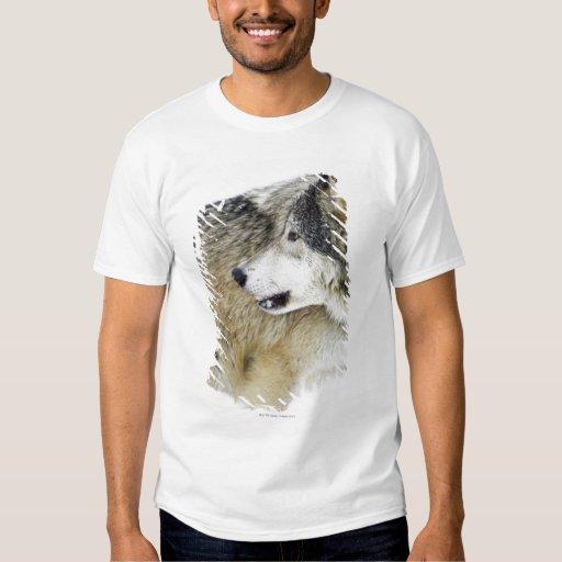 Lobo Camisas