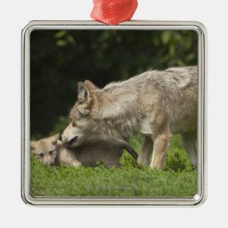 Lobo con el perrito ornamento para arbol de navidad