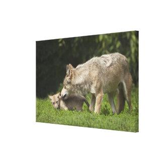 Lobo con el perrito lona estirada galerias