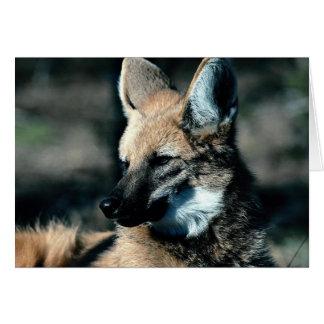 Lobo crinado, primer tarjeta de felicitación
