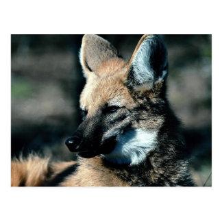 Lobo crinado, primer postales