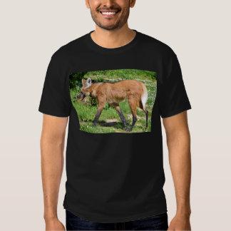 Lobo crinado que camina en hierba camisas