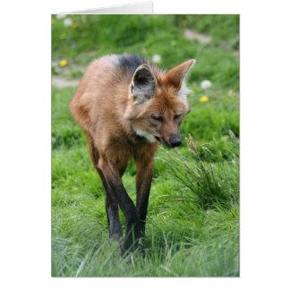 lobo crinado tarjeta de felicitación