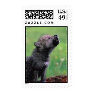 Lobo Cub del grito Sello