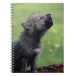 Lobo Cub que grita Libreta