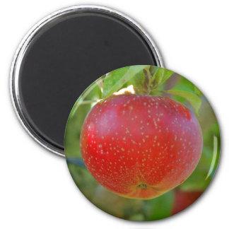 Lobo de Apple Imán Redondo 5 Cm