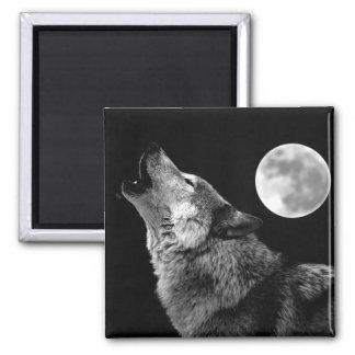 Lobo de BW que grita en la luna Imanes Para Frigoríficos