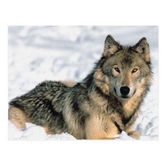Lobo de descanso postal