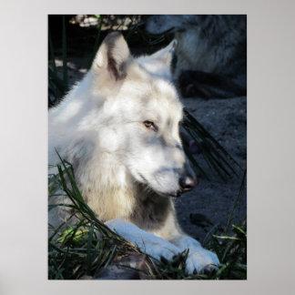 Lobo de Don Juan Impresiones