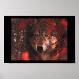 Lobo de la caída póster