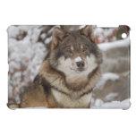 Lobo de la nieve del invierno iPad mini protector