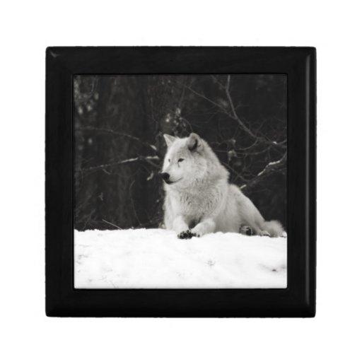 Lobo de la nieve joyero cuadrado pequeño