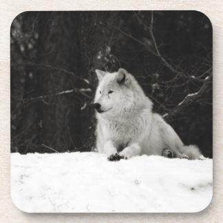 Lobo de la nieve posavasos de bebida