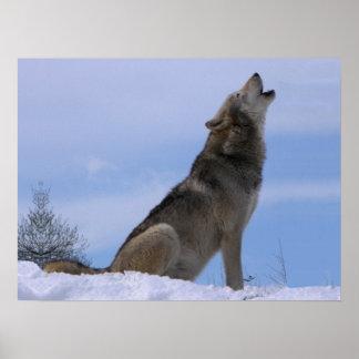 Lobo de madera de Alaska del grito Poster