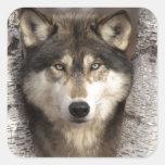 Lobo de madera de Jim Zuckerman Pegatina Cuadrada