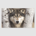 Lobo de madera de Jim Zuckerman Pegatina Rectangular