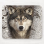 Lobo de madera de Jim Zuckerman Alfombrilla De Ratones