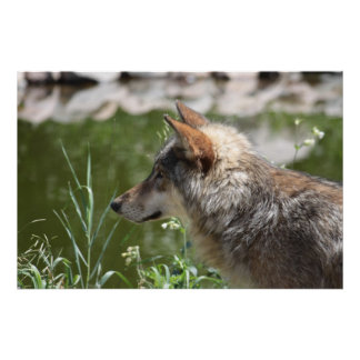 Lobo de madera en perfil poster