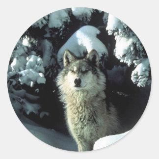Lobo de madera norteamericano en nieve pegatina redonda