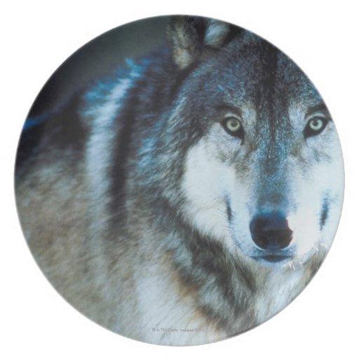 Lobo de madera platos