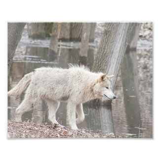 Lobo de madera que camina al lado del agua fotografía