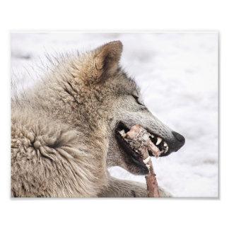 Lobo de madera que come su comida fotografía
