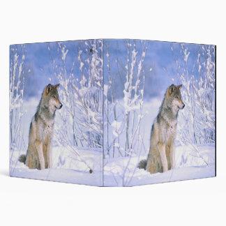 Lobo de madera que se sienta en la nieve, lupus de