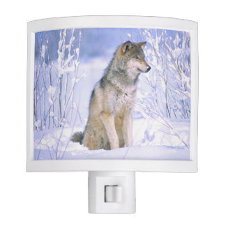 Lobo de madera que se sienta en la nieve, lupus de luces de noche