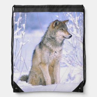 Lobo de madera que se sienta en la nieve, lupus de mochilas