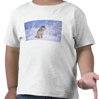 Lobo de madera que se sienta en la nieve, lupus de camiseta