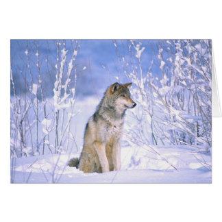 Lobo de madera que se sienta en la nieve, lupus de tarjeta de felicitación