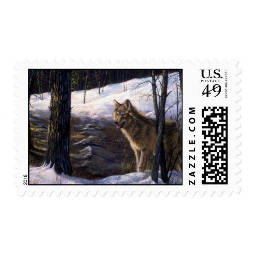 Lobo de madera septentrional franqueo